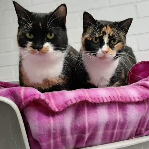 Pilou en Pixi, 4 jaar, zusjes